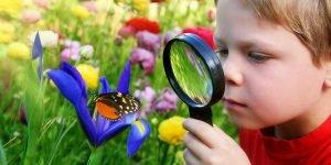 Criar borboletas com crianças