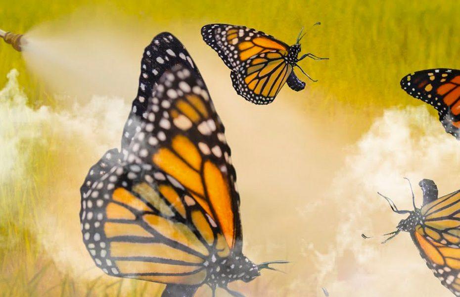 Desaparecimento das borboletas