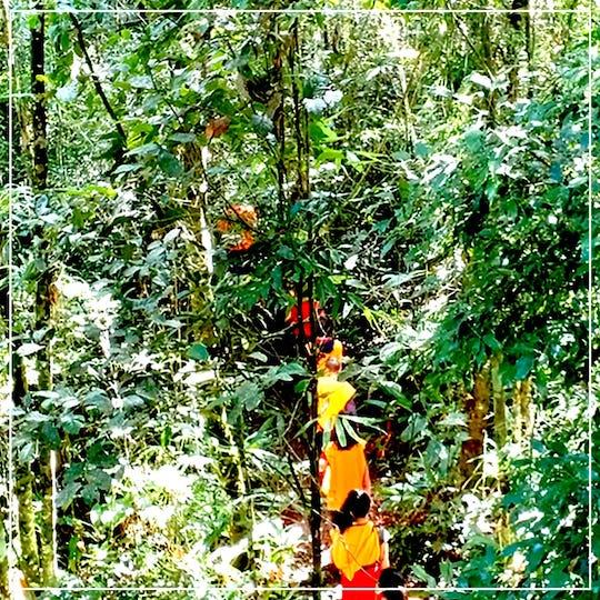 Trilha no borboletário Águias da Serra