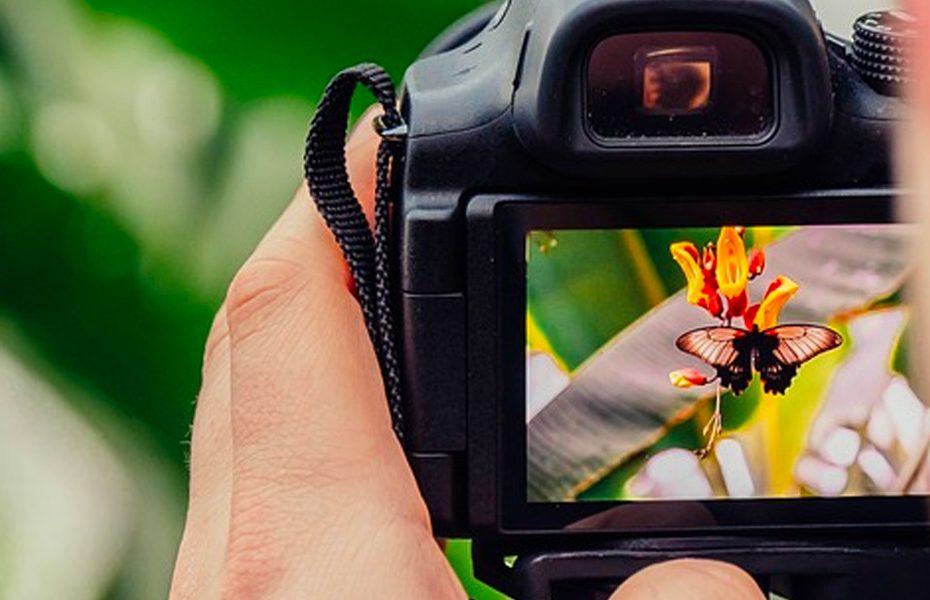 Como fotografar borboletas