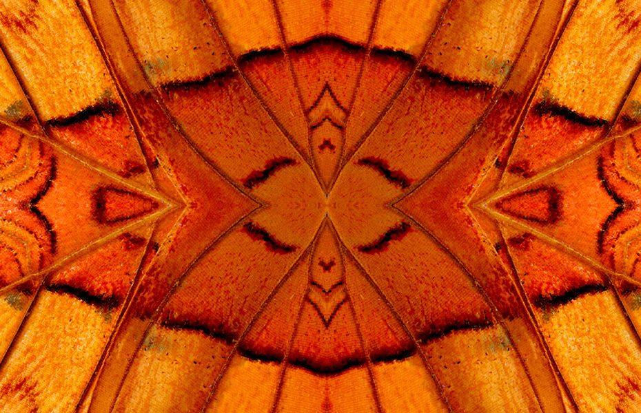 Simetria das borboletas